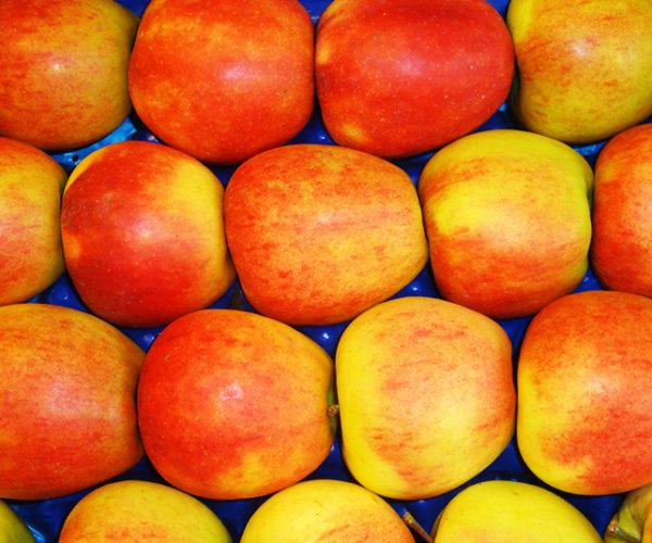 fruit-1c